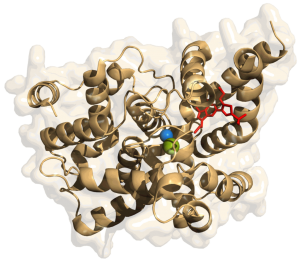 """""""Phosphodiesterase-5"""" von Yikrazuul - Eigenes Werk. Lizenziert unter CC BY-SA 3.0 über Wikimedia Commons - https://commons.wikimedia.org/wiki/File:Phosphodiesterase-5.png#/media/File:Phosphodiesterase-5.png"""