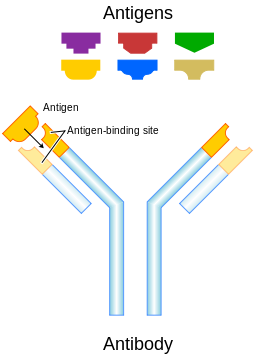 antikoerper-aducanumab