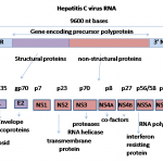hcv_genome-ns5a